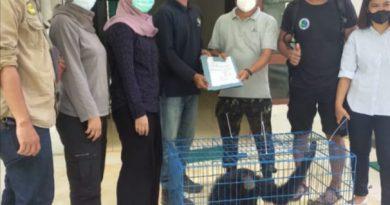 KPH Wilayah I Stabat Serahkan Seekor Siamang ke BBKSDA Sumut